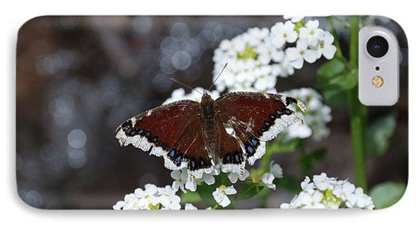 Mourning Cloak IPhone Case by Jason Coward