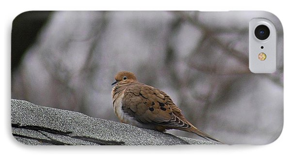 Mourning Dove 20120318_1a IPhone Case by Tina Hopkins