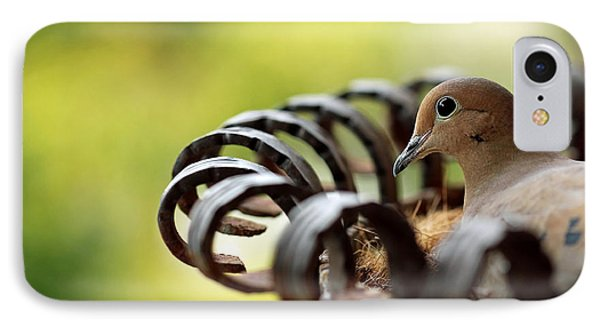 IPhone Case featuring the photograph Mourning Dove In A Flower Planter by Debbie Oppermann