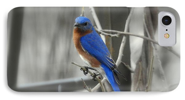 IPhone Case featuring the photograph Mr. Bluebird by Brenda Bostic