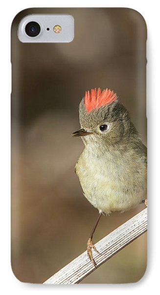 IPhone Case featuring the photograph Mr Kinglet  by Mircea Costina Photography