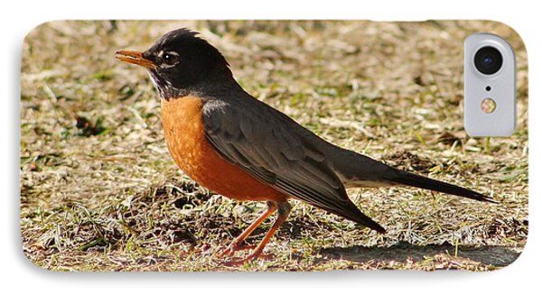 IPhone Case featuring the photograph Mr. Spring Robin by Al Fritz