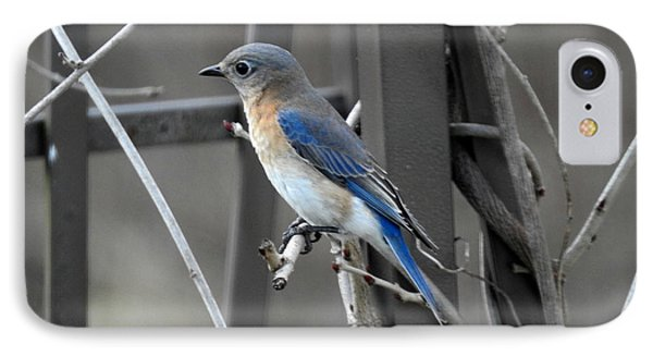 IPhone Case featuring the photograph Mrs. Bluebird by Brenda Bostic
