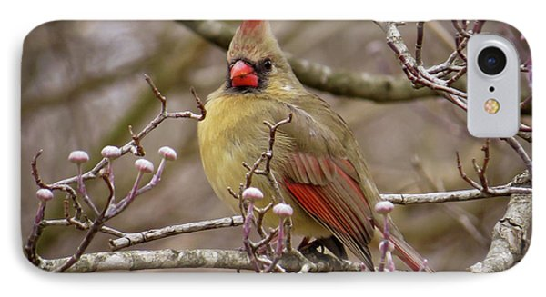 IPhone Case featuring the photograph Mrs Cardinal by Douglas Stucky