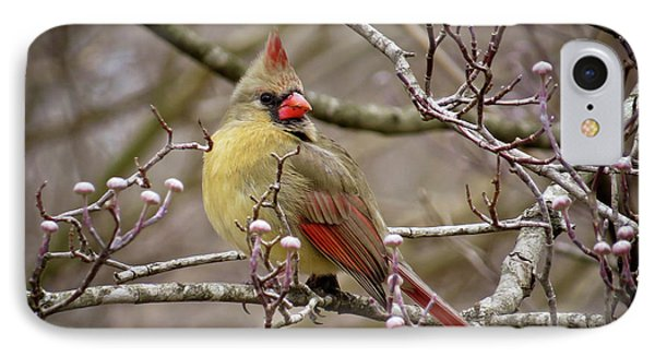 IPhone Case featuring the photograph Mrs Cardinal II by Douglas Stucky