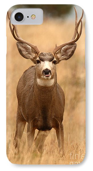 Mule Deer Buck Showing His Thoughts IPhone Case by Max Allen