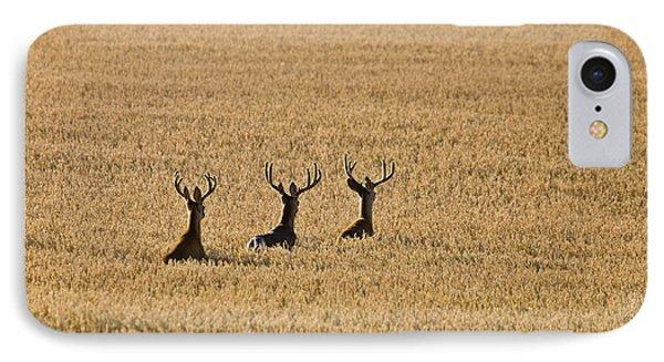 Mule Deer In Wheat Field Phone Case by Mark Duffy