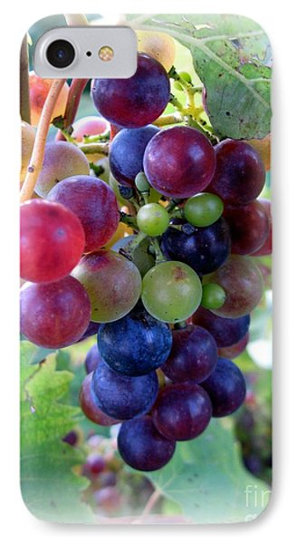 Multicolor Grapes IPhone Case by Carol Sweetwood