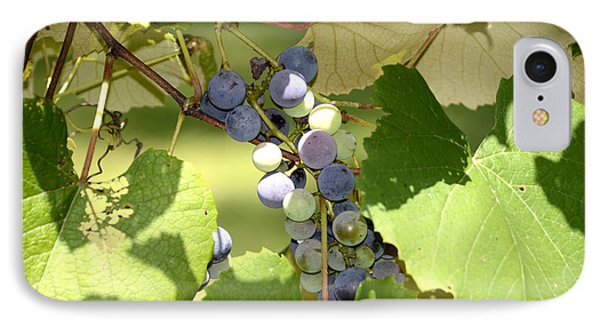 Muscadine Grapes IPhone Case