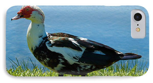 Muscovy Ducks Are Butt-ugly Phone Case by Allan  Hughes