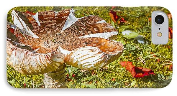 Mushroom Upclose IPhone Case by Judi Saunders