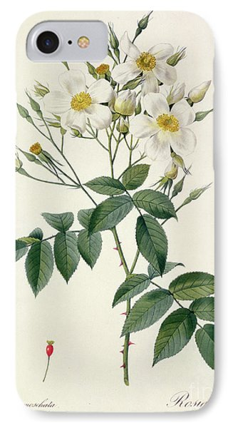 Musk Rose IPhone Case