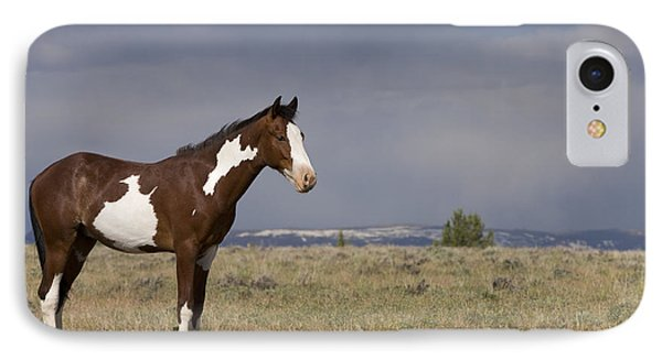Mustang Yearling IPhone Case by Jean-Louis Klein & Marie-Luce Hubert