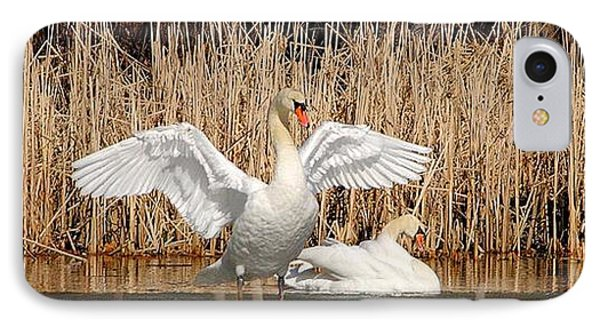 IPhone Case featuring the photograph Spring Arrival Swans by Debbie Stahre