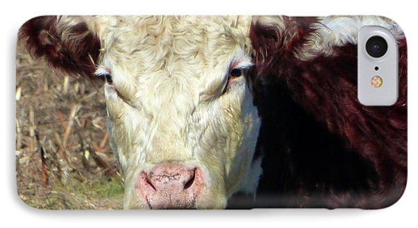 My Favorite Cow IPhone Case by Tina M Wenger