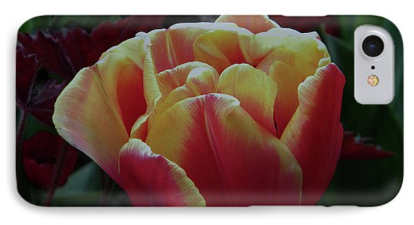 IPhone Case featuring the photograph Mysterious Tulip by Manuela Constantin