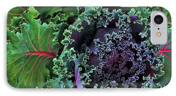 Naples Kale IPhone Case by Lynda Lehmann