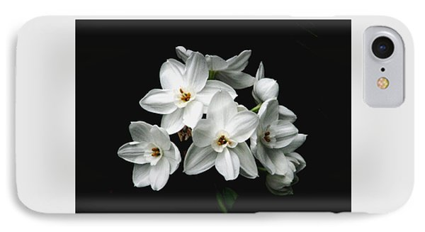 Narcissus The Breath Of Spring Phone Case by Angela Davies