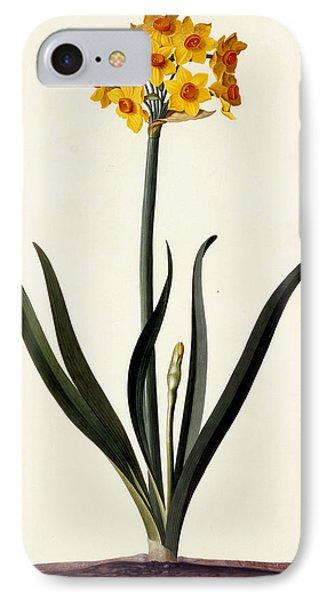 Narcissus IPhone Case by Georg Dionysius Ehret