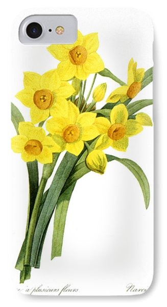 Narcissus (n. Tazetta) IPhone Case by Granger