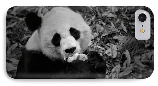 National Zoo Giant Panda IPhone Case by Kyle Hanson