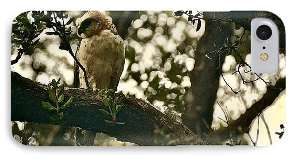 The Golden 'io Hawaiian Hawk IPhone Case by Lehua Pekelo-Stearns