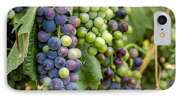 Natures Colors In Wine Grapes IPhone Case by Teri Virbickis