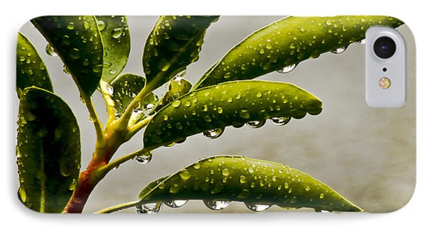 Early Morning Raindrops IPhone Case by Carol F Austin