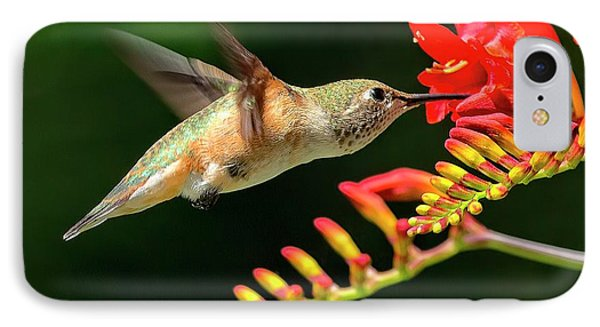 Nectar Time IPhone Case by Sheldon Bilsker