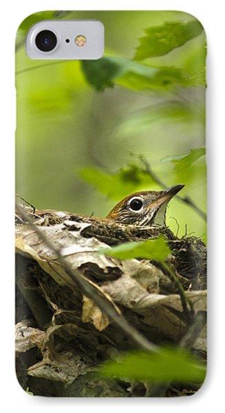 Nesting Birds - Wood Thrush Phone Case by Christina Rollo