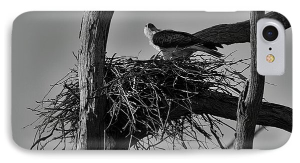 IPhone Case featuring the photograph Nesting V2 by Douglas Barnard