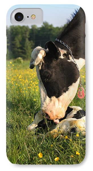 New Born Calf IPhone Case by Brook Burling