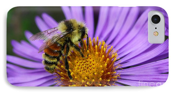 IPhone Case featuring the photograph New England Aster And Bee by Steve Augustin
