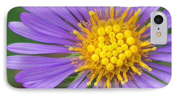 New England Aster IPhone Case