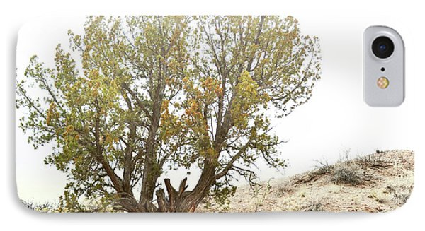 IPhone Case featuring the photograph New Mexico Desert Southwest Tree by Andrea Hazel Ihlefeld