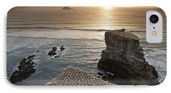 new zealand gannet colony at muriwai beach ,gannet fly from Muri IPhone Case by Juergen Held