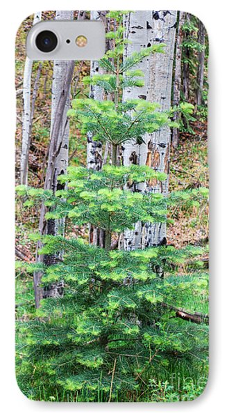 IPhone Case featuring the photograph Next Years Christmas Tree by Donna Greene