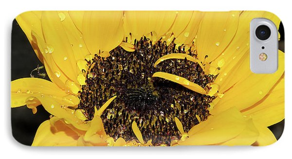 IPhone Case featuring the photograph Nice Sunflower by Elvira Ladocki