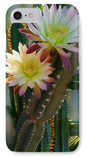 IPhone Case featuring the photograph Night-blooming Cereus 4 by Marilyn Smith