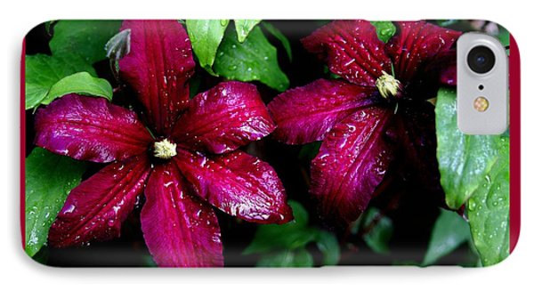 Niobe Clematis IPhone Case by Stacie Gary