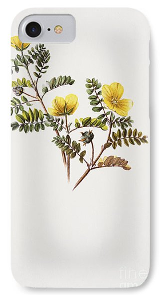 Nohu Flower - Vintage Phone Case by Hawaiian Legacy Archive - Printscapes