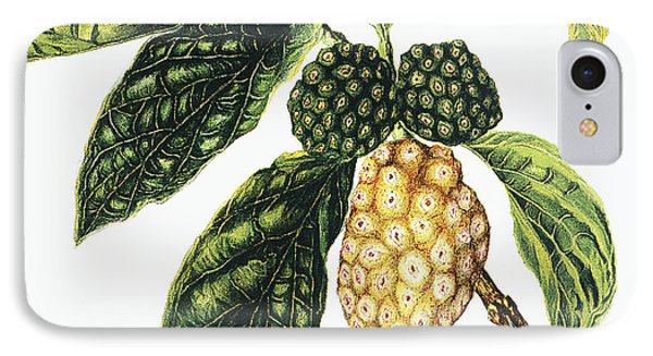 Noni Fruit Phone Case by Hawaiian Legacy Archive - Printscapes