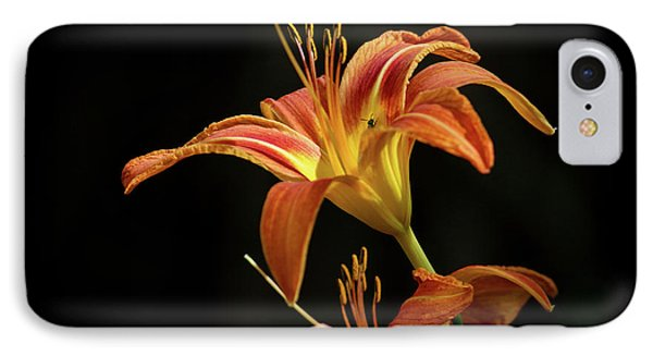 IPhone Case featuring the photograph Norris Lake Daylily by Douglas Stucky