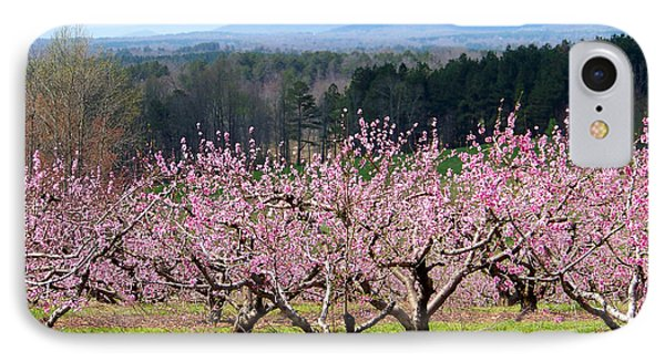 North Georgia Peach Trees In Bloom Phone Case by Judy Grindle Shook