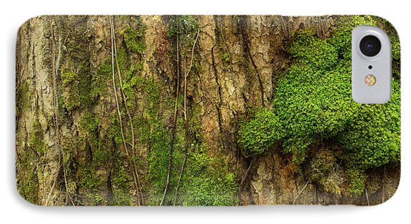 IPhone Case featuring the photograph North Side Of The Tree by Mike Eingle