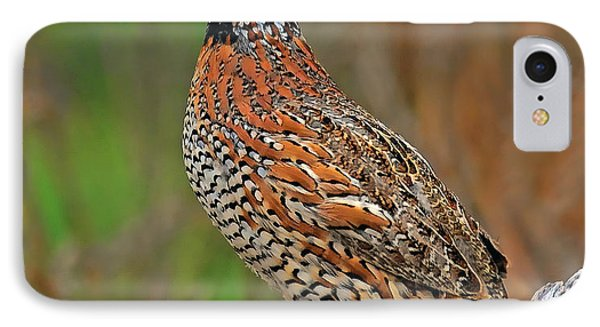 Northern Bobwhite IPhone Case by Dave Mills