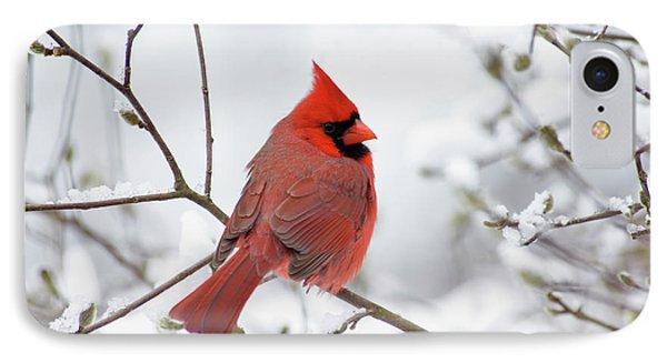 Northern Cardinal - D001540 Phone Case by Daniel Dempster