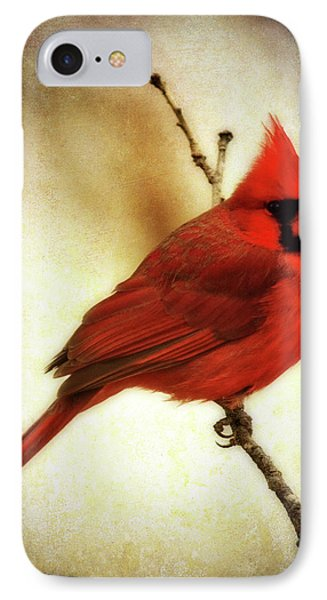 Northern Cardinal IPhone Case by Lana Trussell