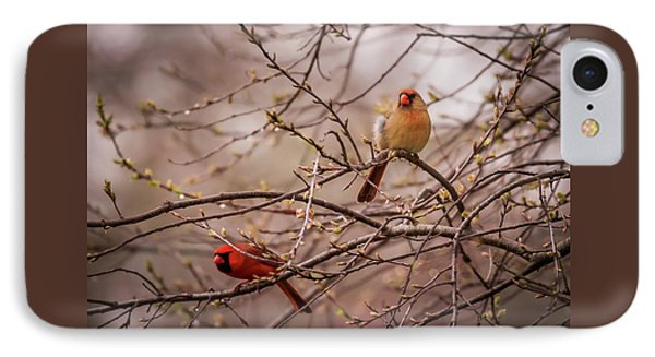 IPhone Case featuring the photograph Northern Cardinal Pair In Spring by Terry DeLuco