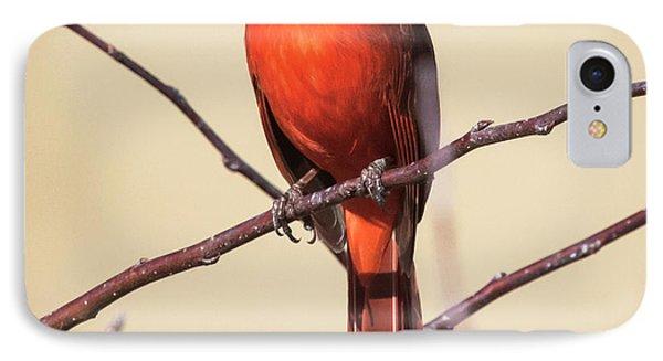 Northern Cardinal Profile IPhone 7 Case